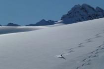 Unberührte Gletscherflächen, perfekter Schnee,…